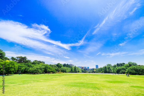 Foto Murales 新緑が眩しい休日の公園