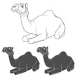 Set of black and white images of a camel. Isolated vector objects on white background.