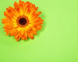 открытка из яркого оранжевого цветка гербера на бумажном салатовом фоне