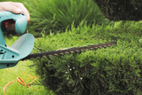 Pruning Plants Close Up. Professional Gardener Pruning conifers - 143183074