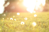 A blurred background of a grassy meadow with dandelions and sunshine.