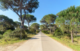 road in the pine forest, Marina di Alberese, tuscany, italy