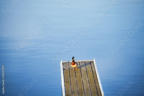 Fotobehang Lonely duck on an empty pier.
