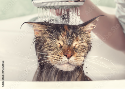 Póster Wet cat in the bath