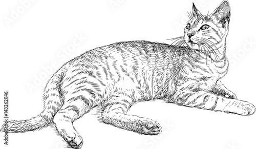 lying domestic cat
