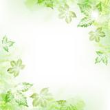 Spring leaves background - 143267222