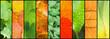 collage de feuilles
