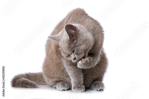 Katze schleckt sich die Pfote