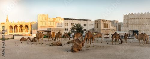 Fotobehang Kameel Panorama des Kamel Marktes am Souq Waqif in Doha, Katar