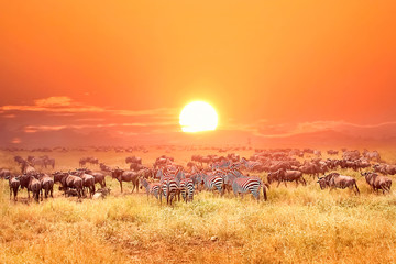 Zebras and antelopes in africa national park. Sunset. © delbars