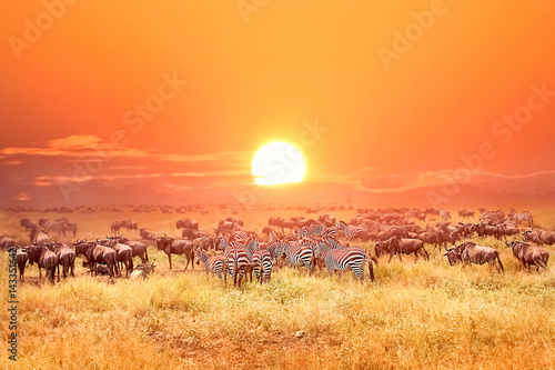 Zebras and antelopes in africa national park. Sunset. Poster