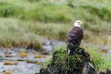 Eagle on Mound