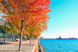 Color fall trees at Urban Beach Park, Sugar Beach, Toronto, Canada
