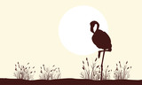 Flamingo beauty landscape silhouettes collection