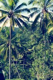 Tropical Landscape Of Bali