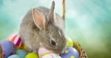 Easter rabbit with eggs basket in front of nature background