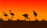Flamingo scenery at sunset silhouettes