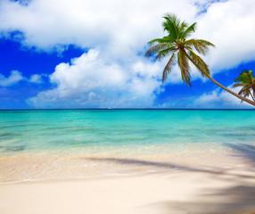 Caribbean sea and palm tree.