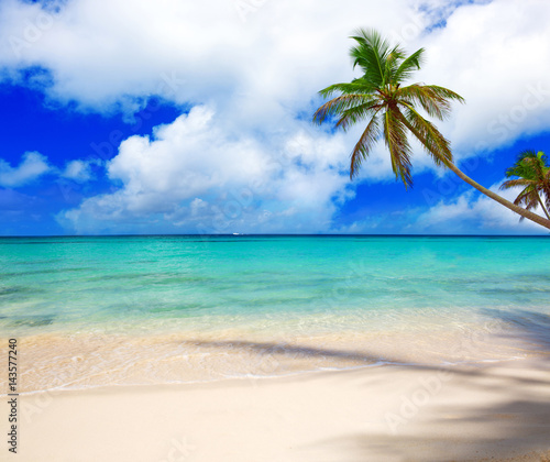 Caribbean sea and palm tree.