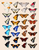 Collection of butterflies - 143587285