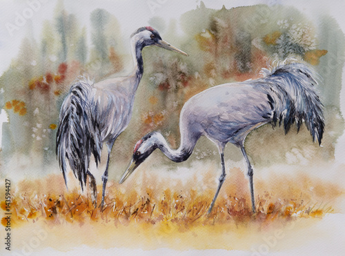 Pair of a crane birds on a meadow. Picture created with watercolors. - 143594427