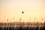 birds nesting in lake in sunrise