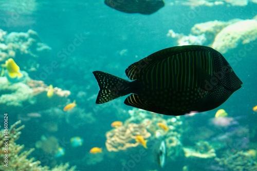 Foto op Canvas Groene koraal ein Korallenriff