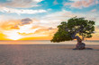 Постер, плакат: Idyllic view of tropical Aruba beach with Divi Divi tree at sunset