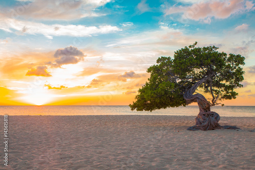 Poster Idyllic view of tropical Aruba beach with Divi Divi tree at sunset