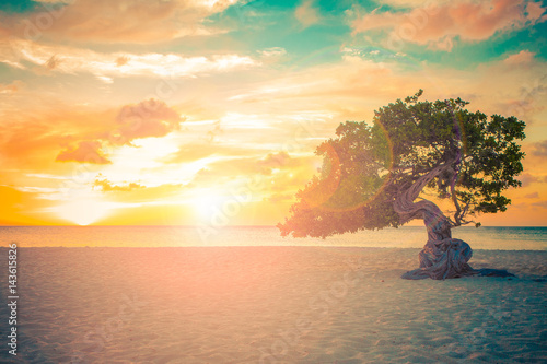 Poster Aruba beach sunset with Divi Divi Tree