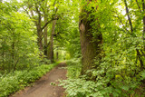 Zielona droga leśna