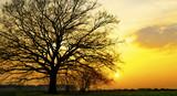 Silhouette eines Baumes im Sonnenuntergang
