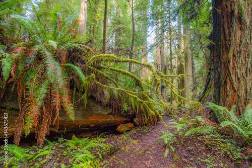 Huge logs overgrown with moss and fern lie in the forest Poster