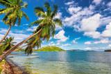 Coconut palm trees on tropical island.