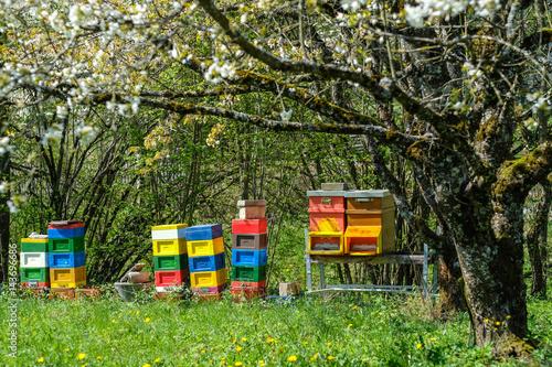 Billede Bienenhäuschen zur Honigproduktion