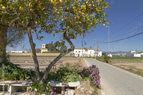 Orchard area near Valencia.