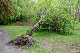 Fallen tree - 143741419