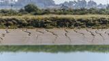 Odiel marshes in Huelva