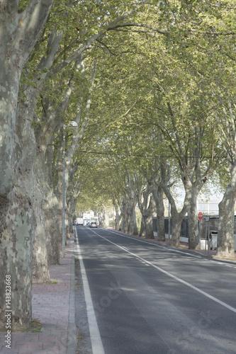 Tree Lined Road, San Antonio, Ibiza Poster
