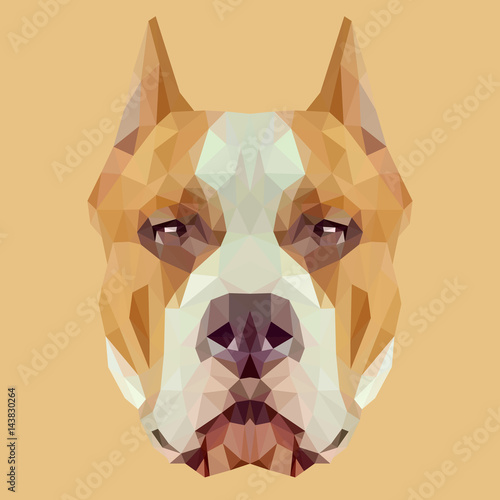 American Staffordshire Terrier dog animal low poly design. Triangle vector illustration. © shekularaz