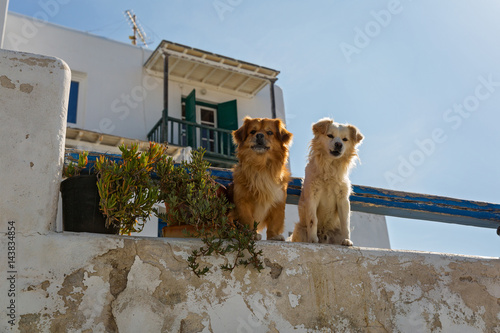 Two dogs in Greece