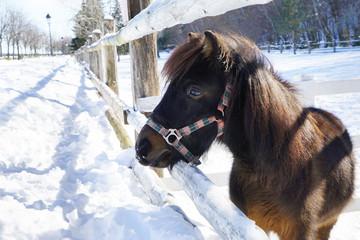 Beautiful pony in zoo