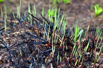Plant Growth Prairie Burn