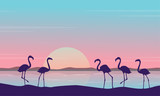 At sunrise flamingo scenery silhouettes