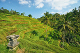 Beautiful landscape with green rice terraces near Tegallalang village, Ubud, Bali, Indonesia.