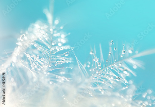 A drop of water dew on a fluffy feather close-up macro on blue  background. Abstract romantic delicate magical artistic image.