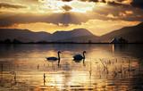 Swans on lake during sunset