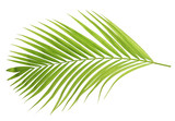 Green coconut leaf isolated - 143938806