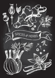 Hand drawn set of herbs and spices - poppy, ginger root, cardamom, coriander, fennel, cloves, black pepper, cumin, vanilla pods with a flower. Vector Illustration on the blackboard. - 143952013
