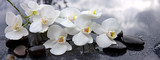 Fototapeta Kitchen - White orchid and black stones close up. © Swetlana Wall